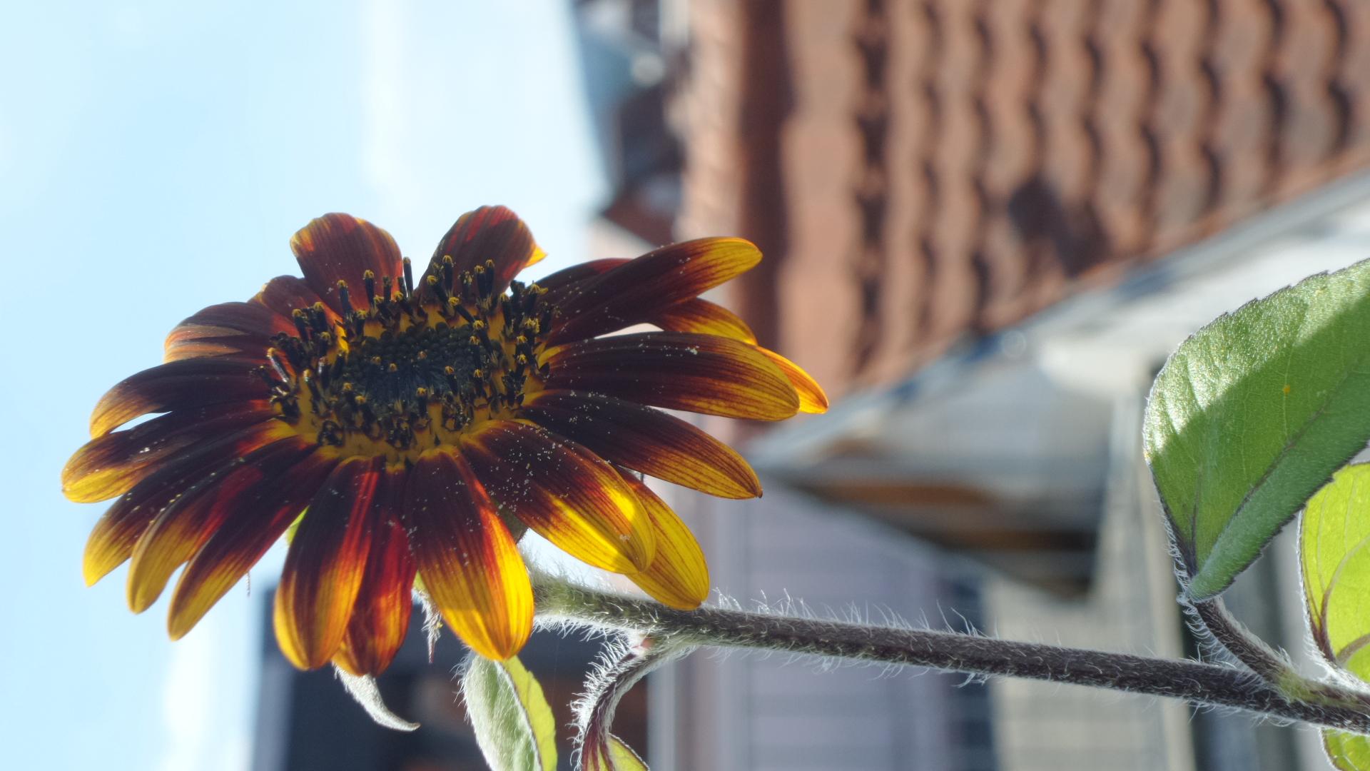 Flower near